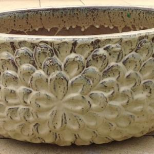 Daisy Water Bowl Antique Creme ST211559
