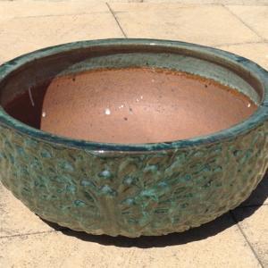 Daisy Water Bowl Moss Green ST211559
